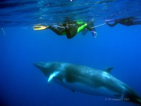 whaledivers.jpg