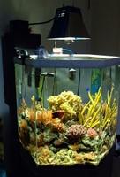 42_Reef_with_Deltec_HOB_skimmer.jpg