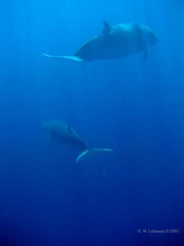 whaleretreat.jpg