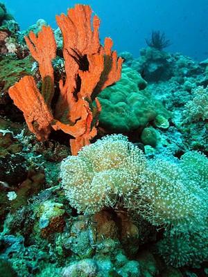 Reefsponge.jpg