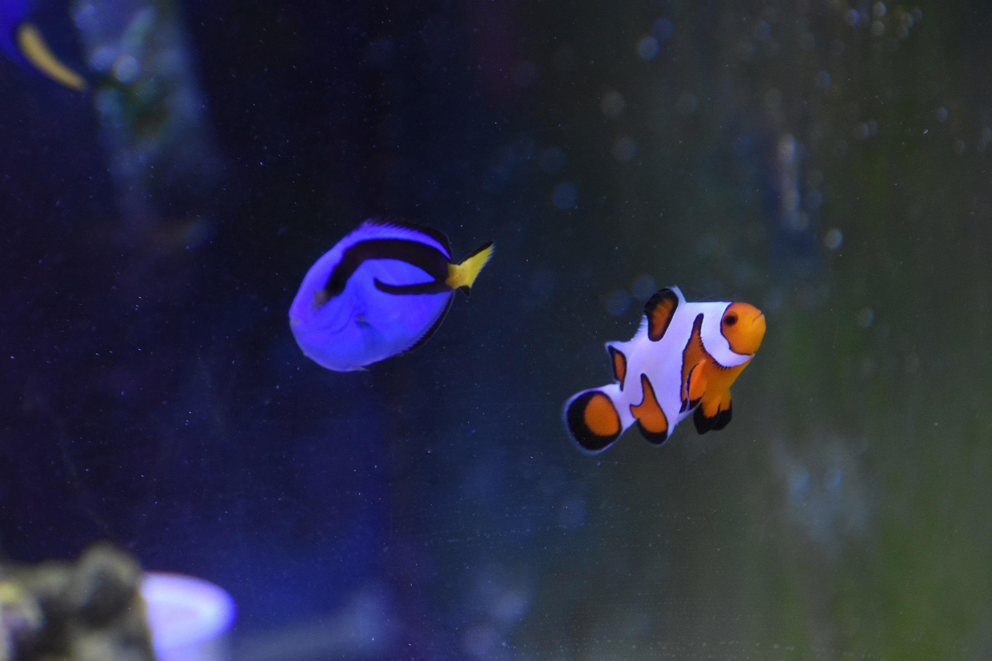 An Aquacultured Tomorrow