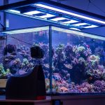 Aquaticlife T5 Hybrid Light Fixture: The Definitive Review