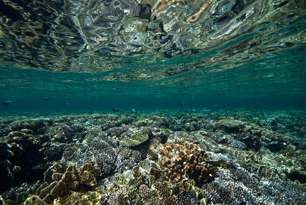 reef flat, coral