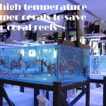 Revolutionary method of saving/restoring corals from rising ocean temperatures