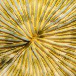 Reefapalooza 2019 New York: Corals, Part III