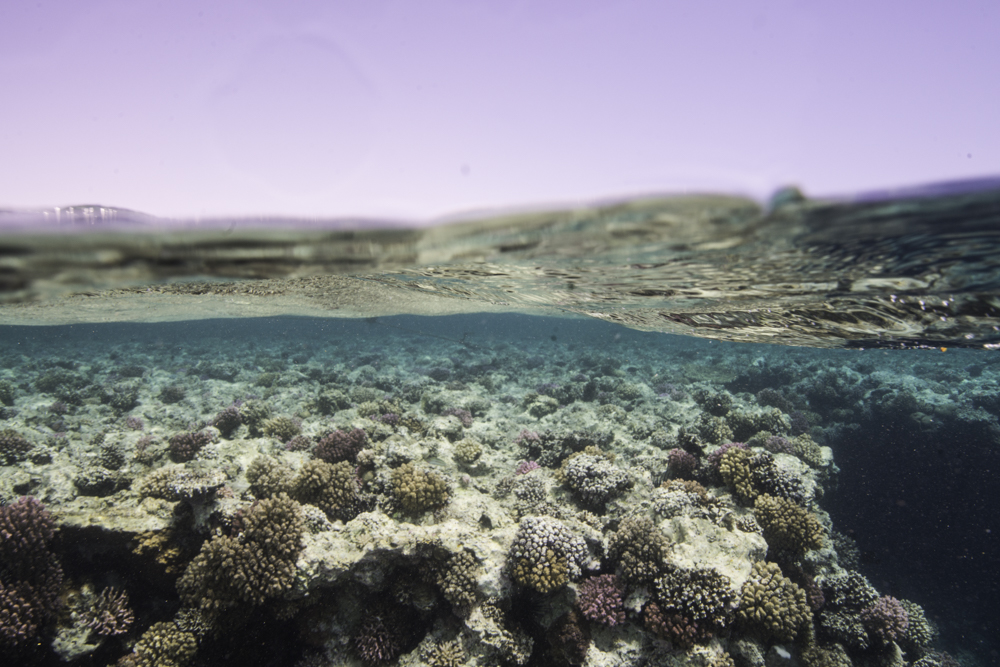 shallow coral reef