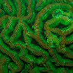 Fluorescence Photography- MACNA Edition Part Two: What is coral fluorescence?
