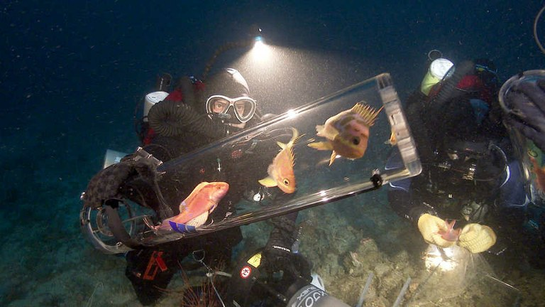 A new invention safely brings deep-water fishes to surface
