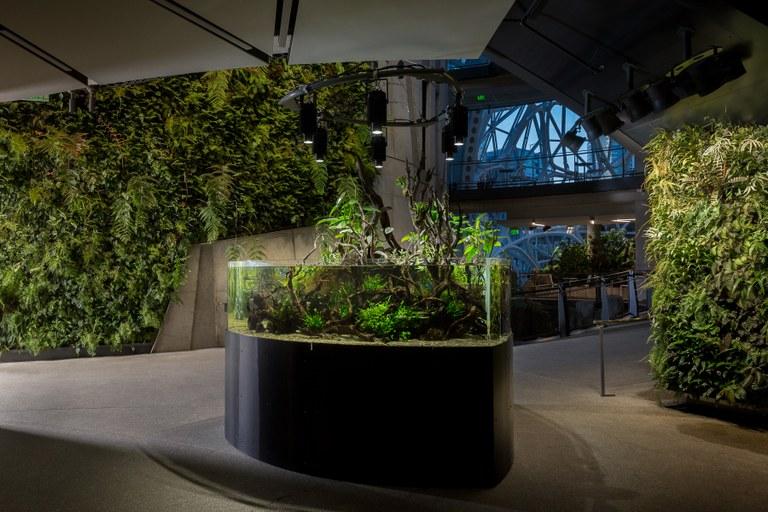 An Amazon Aquarium at Amazon.com