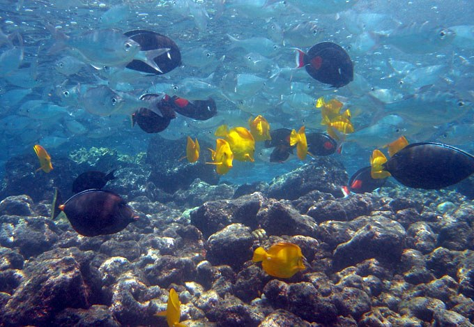 16 new Hawai'i Senate measures introduced, seeks aquarium trade ban or regulation