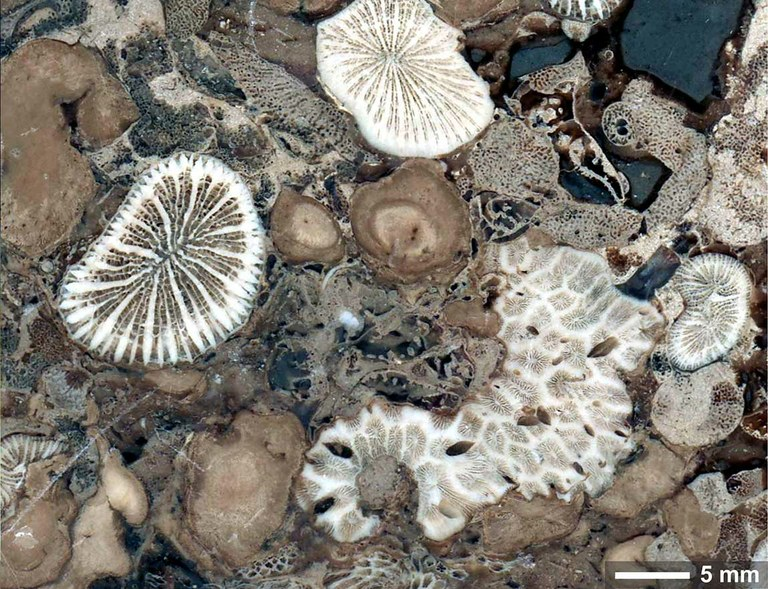 Corals and zooxanthallae: A 210 million year old relationship