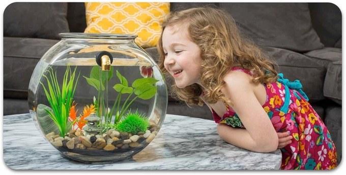 A new, bigger NoClean Aquarium