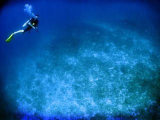 Clues in Coral Bleaching Mystery