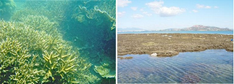 Coral reef thriving in sediment-laden waters