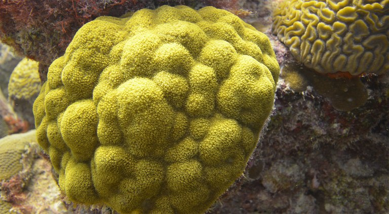 Corals consume (lots of) bacteria