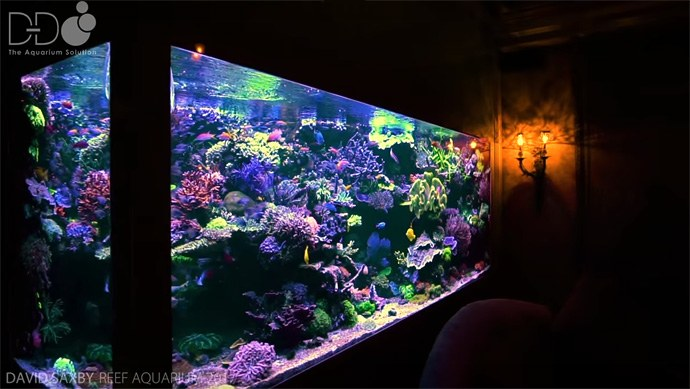 David Saxby's reef tank and fish room are the stuff of dreams