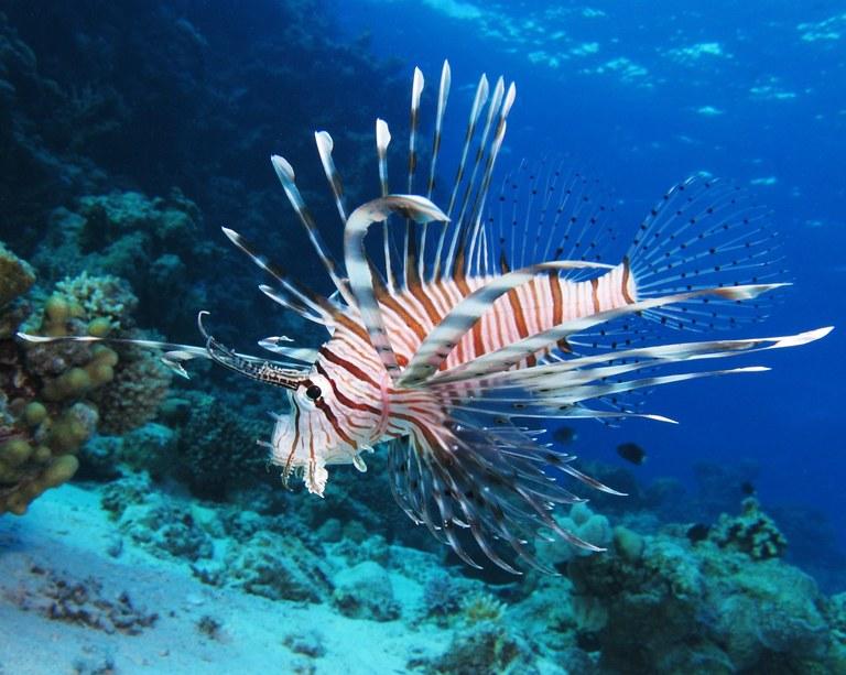 Florida bans import of lionfish