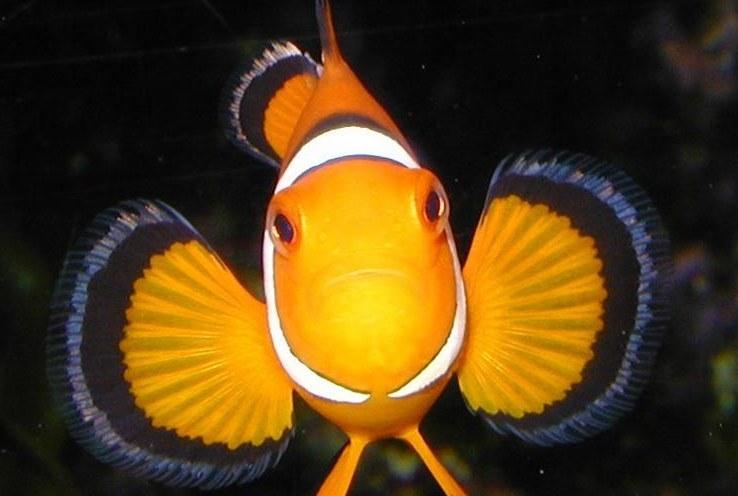 High carbon dioxide levels change fish behavior?