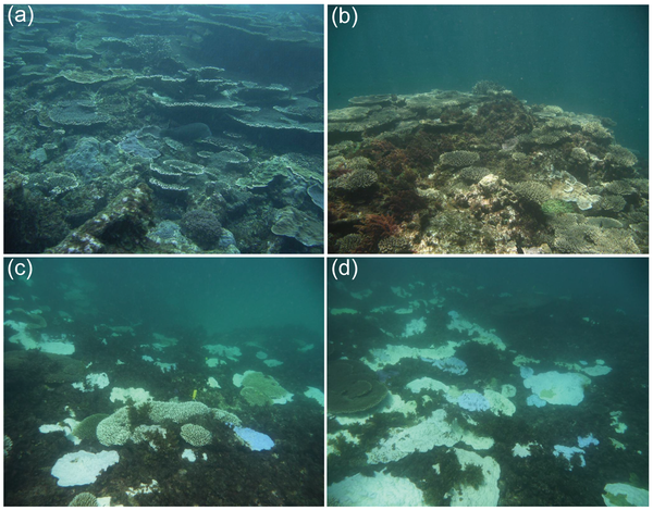 Higher latitude corals experience bleaching at the Houtman Abrolhos Islands