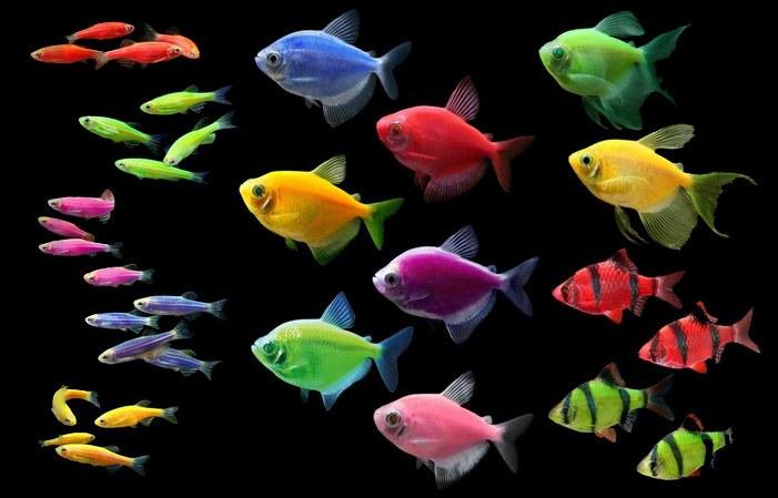How much is GloFish worth?