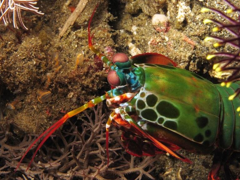 Mantis shrimps teaches us about monogamous relationships
