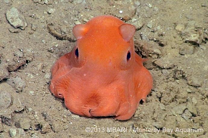 Monterey Bay Aquarium's newest superstar