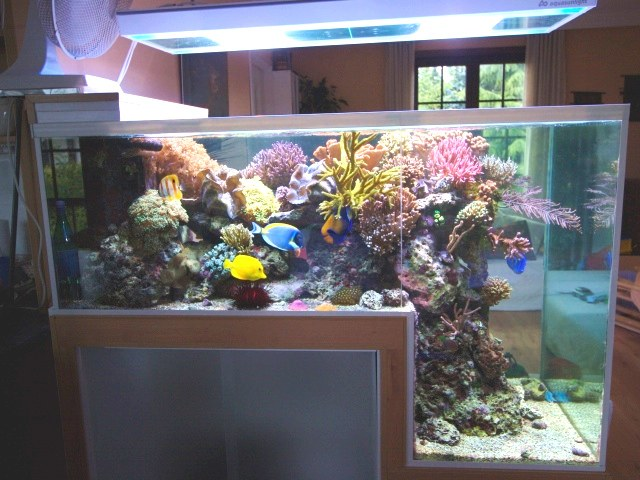 Philippe Grosjean's Unique Dropoff Reef Aquarium