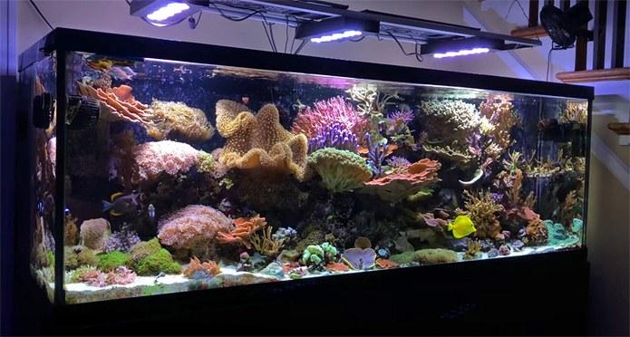 Reefspy's charming 180 gallon mixed reef
