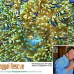 Ret Talbot interview about BanggaiRescue