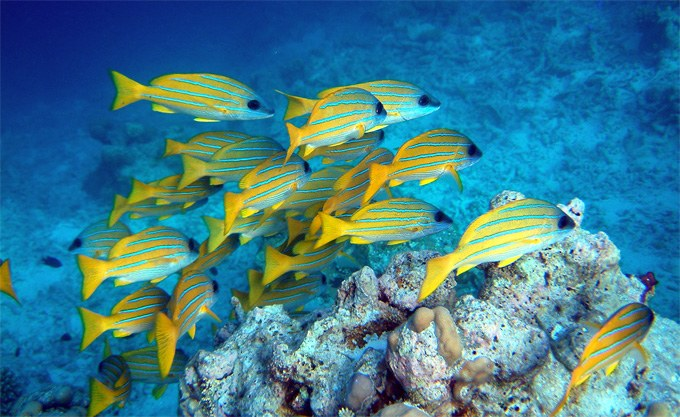 Schooling fish expend less energy due to flow dynamics