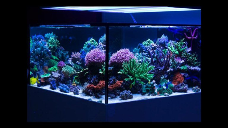 """Scotty and Tammy's magnificent """"4x4"""" 240 gallon SPS reef"""