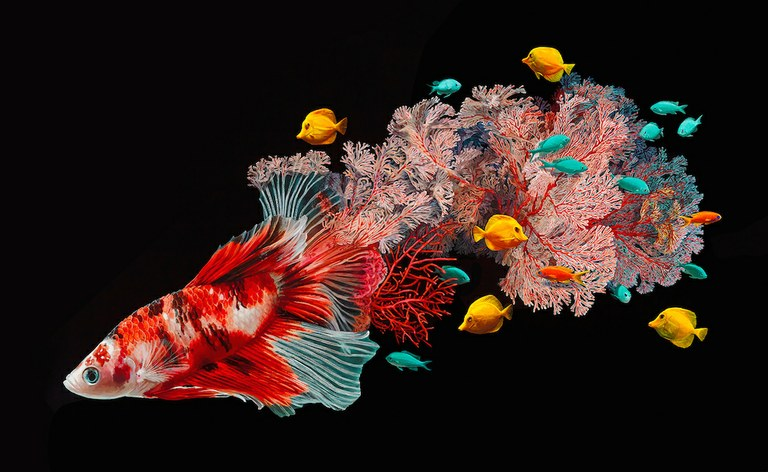 Surreal! Art blending freshwater fish with coral reefs