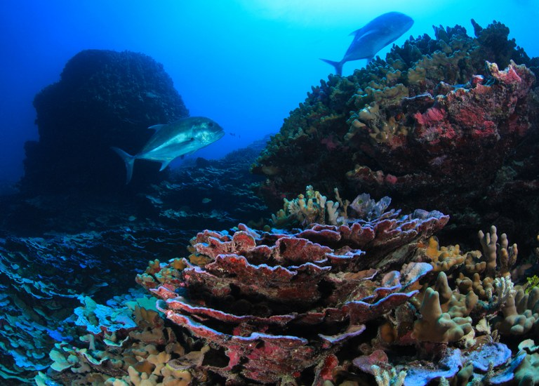 Trump could reduce or eliminate eleven marine reserves