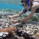 Understanding how corals respond tostresses