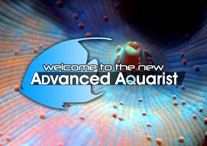Welcome to the new Advanced Aquarist