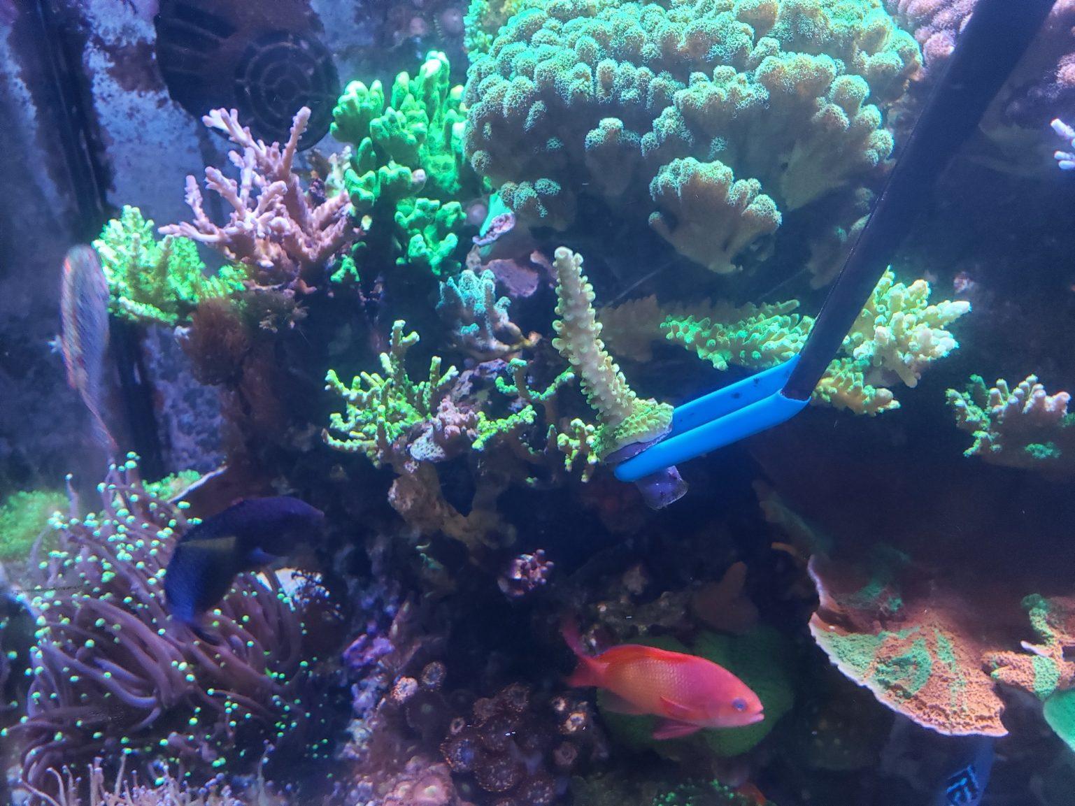 New Coral FRAG Propagation FRAGGING Set KIT Reef DIY Hard Soft Live Tools CRL-0032 PRECISE CANADA