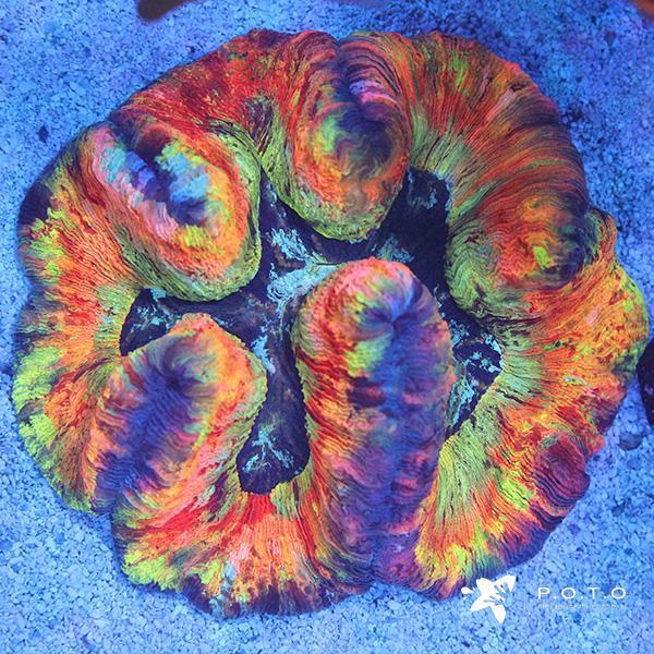 rainbow-wellso_1728x.jpg