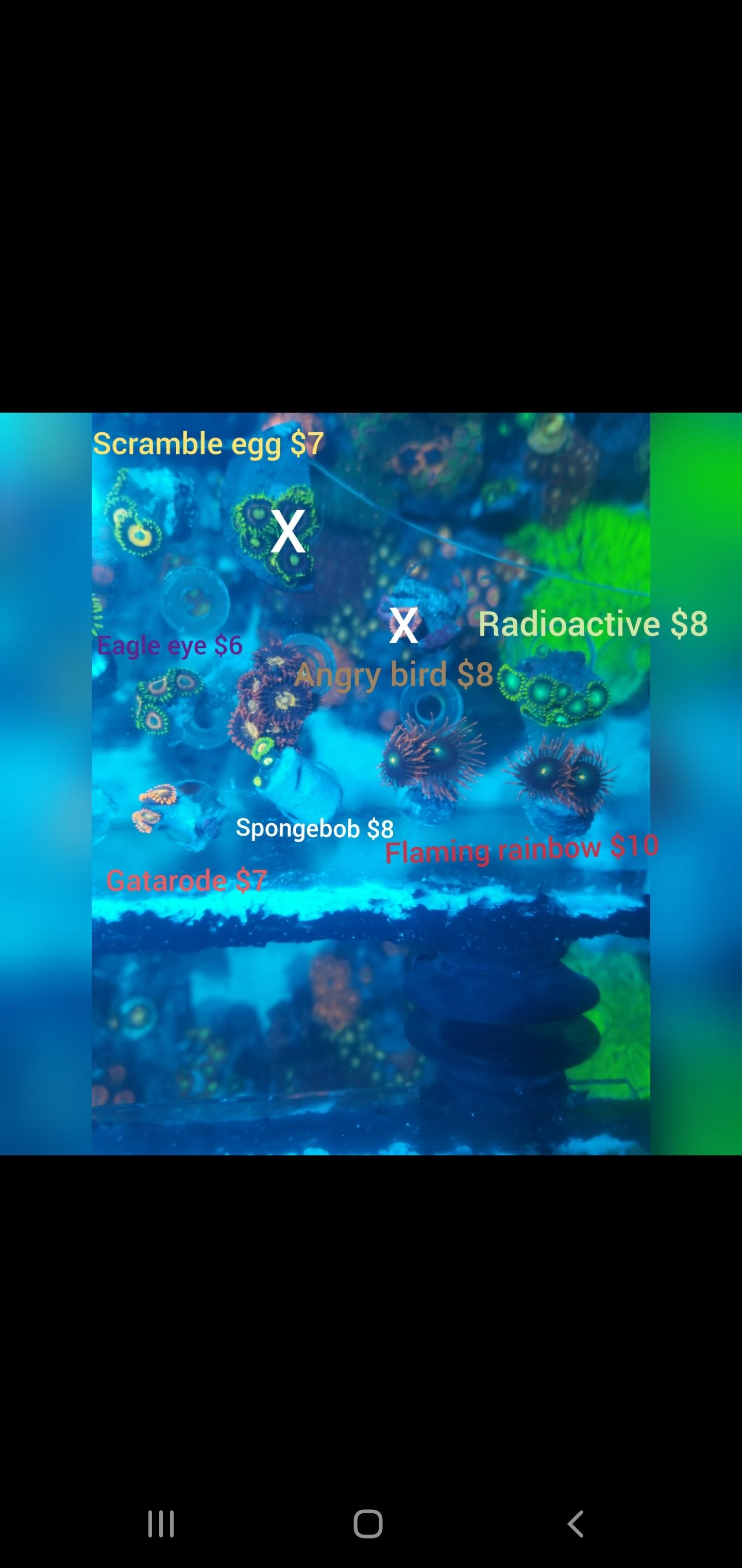Screenshot_20191028-155937_Gallery.jpg
