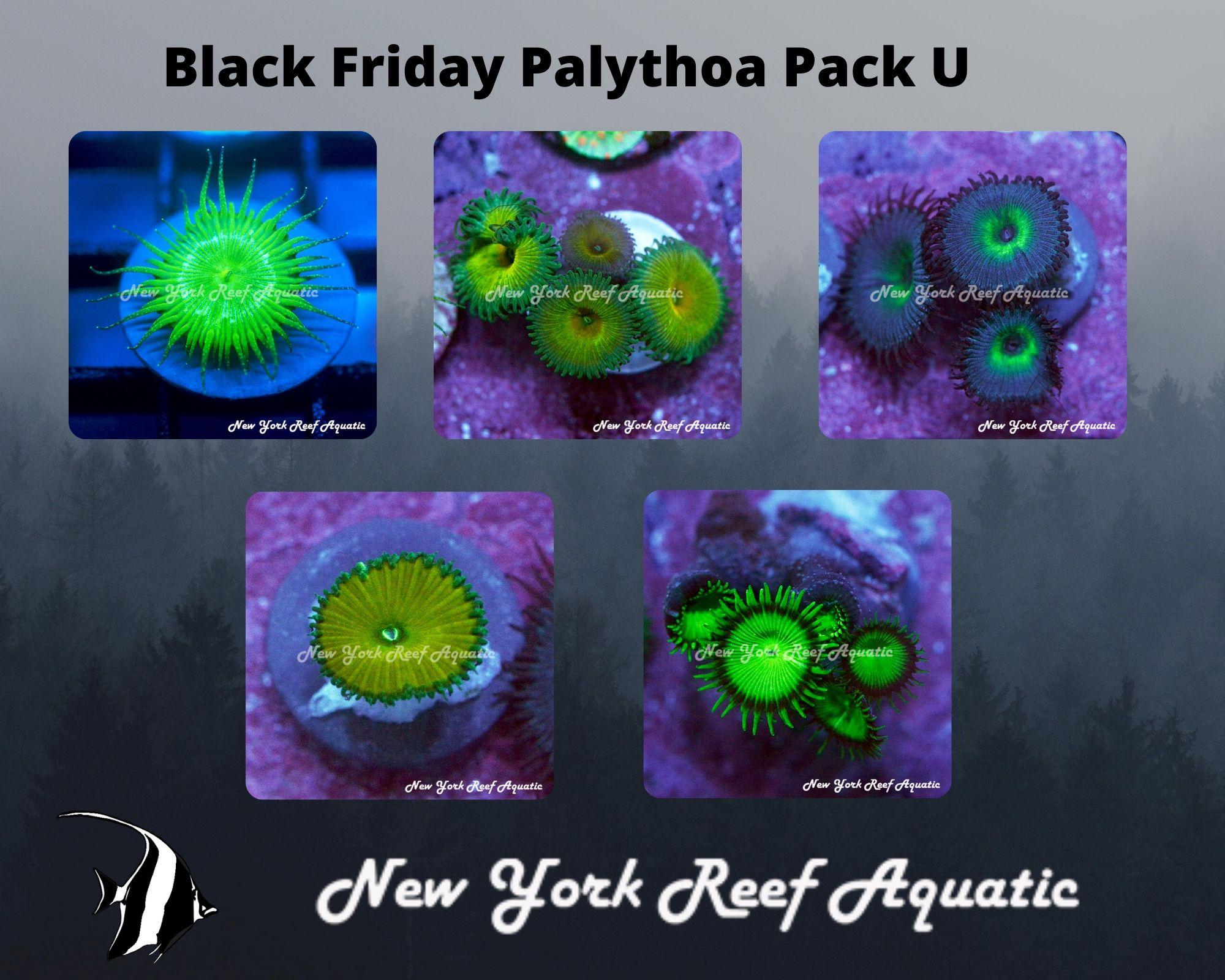 Palythoa Pack U.jpg