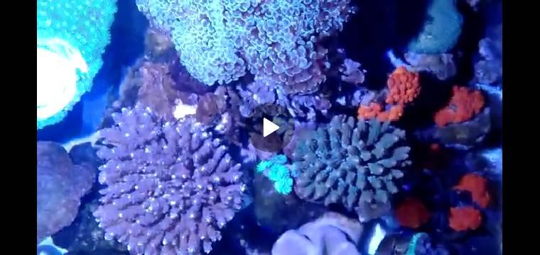 Screenshot_2020-04-22-21-17-07-77.jpg