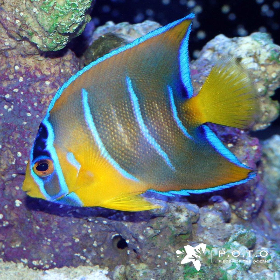 Sabingo-FISH-6-4-11_1080x.jpeg