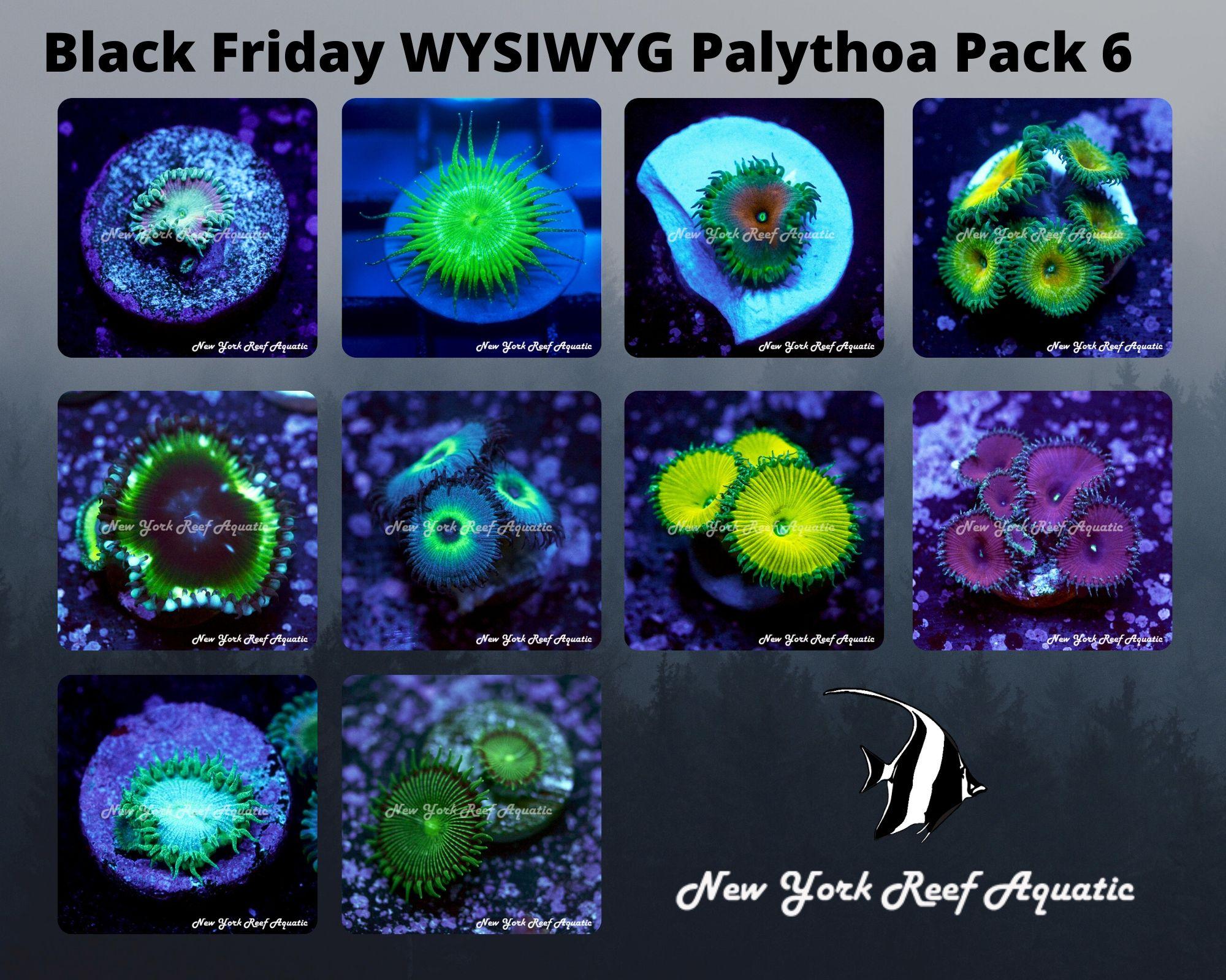 Palythoa Pack 6.jpg