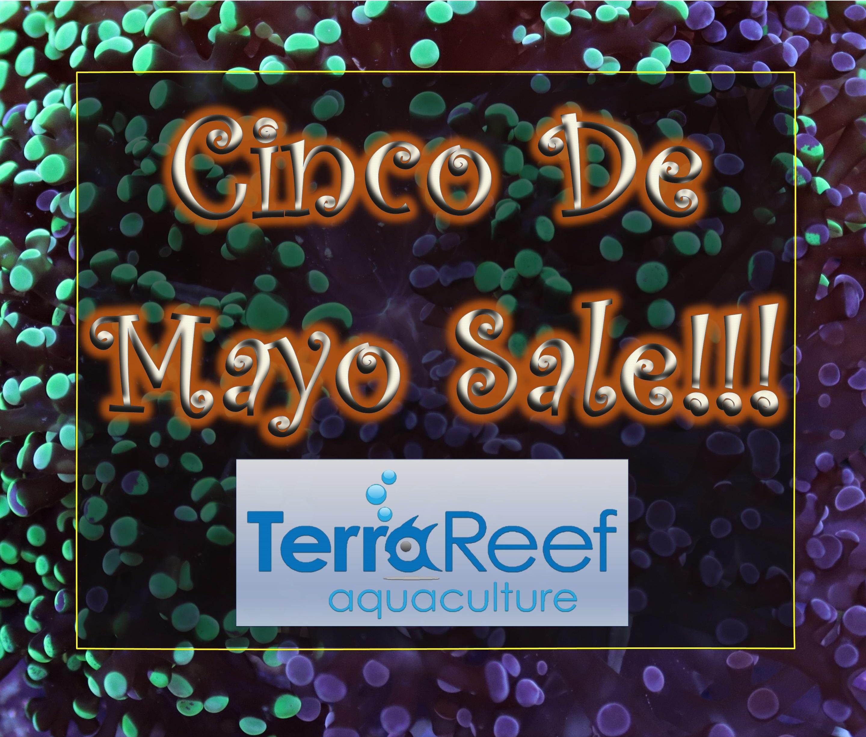 Cinco-De-Mayo-Coral-Sale.jpg