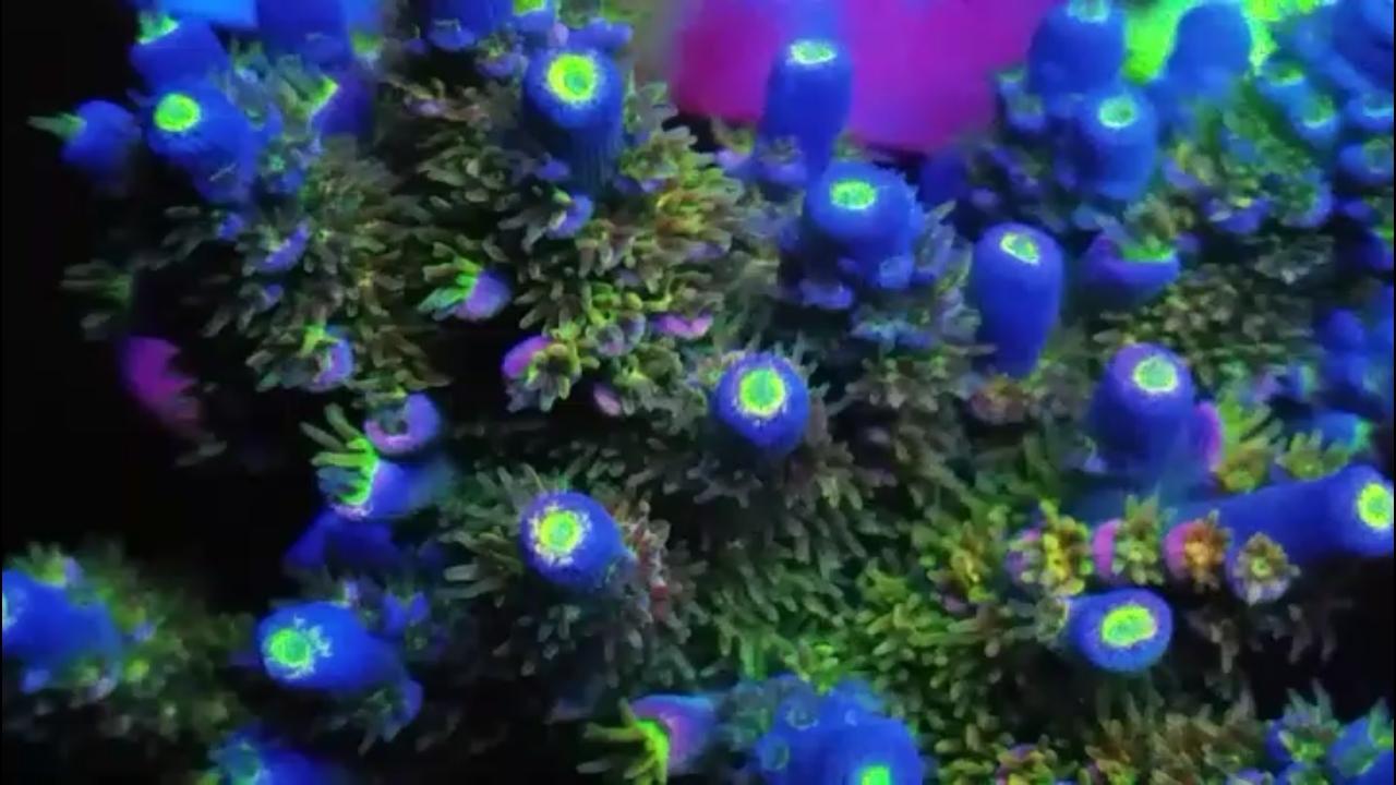 Screenshot_20200504-232645_Video Player.jpg