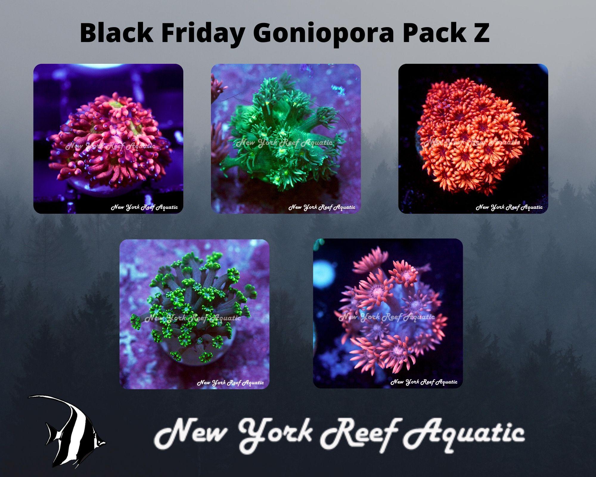 Goniopora Pack Z.jpg