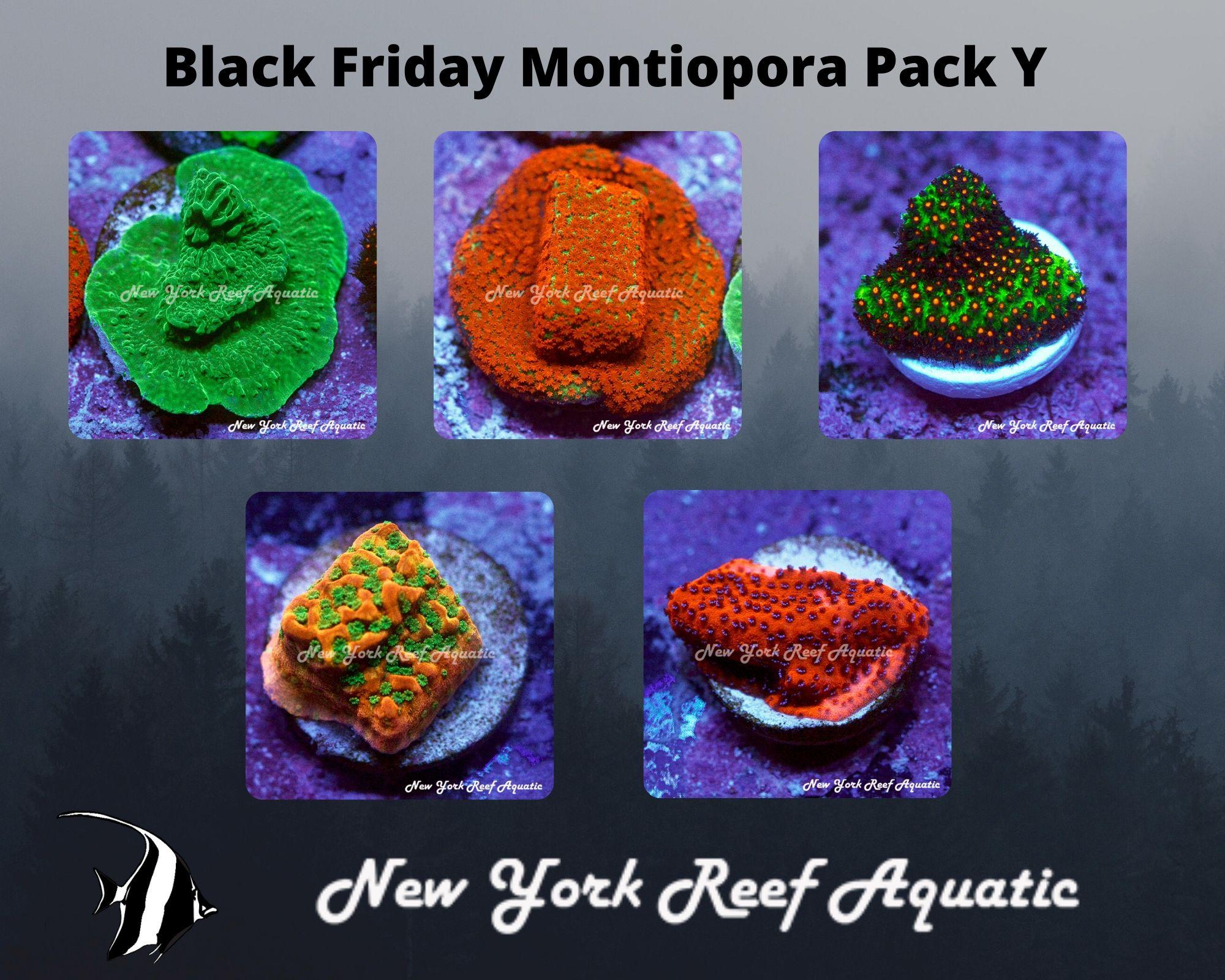 Montiopora Pack Y.jpg