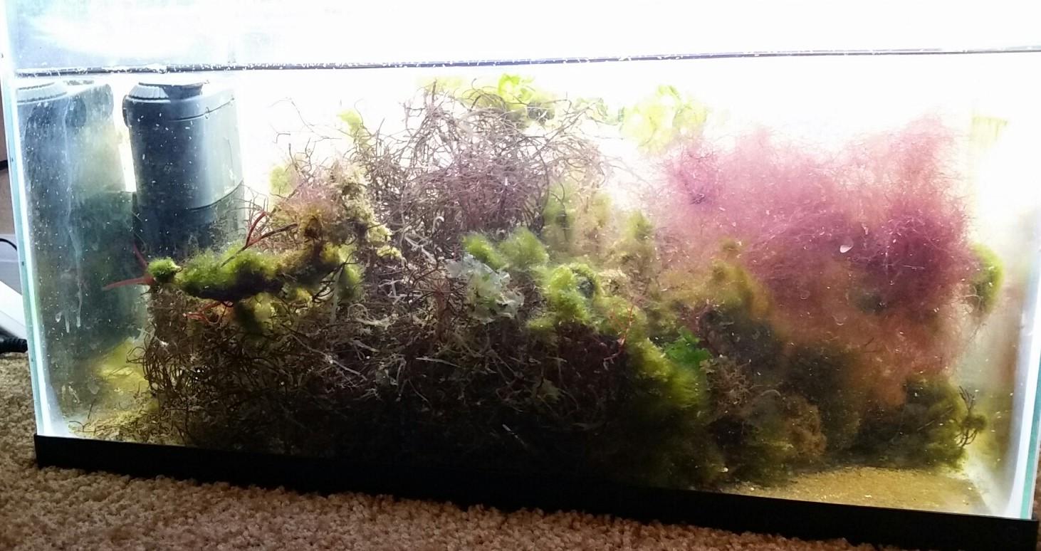 algae (2).jpg