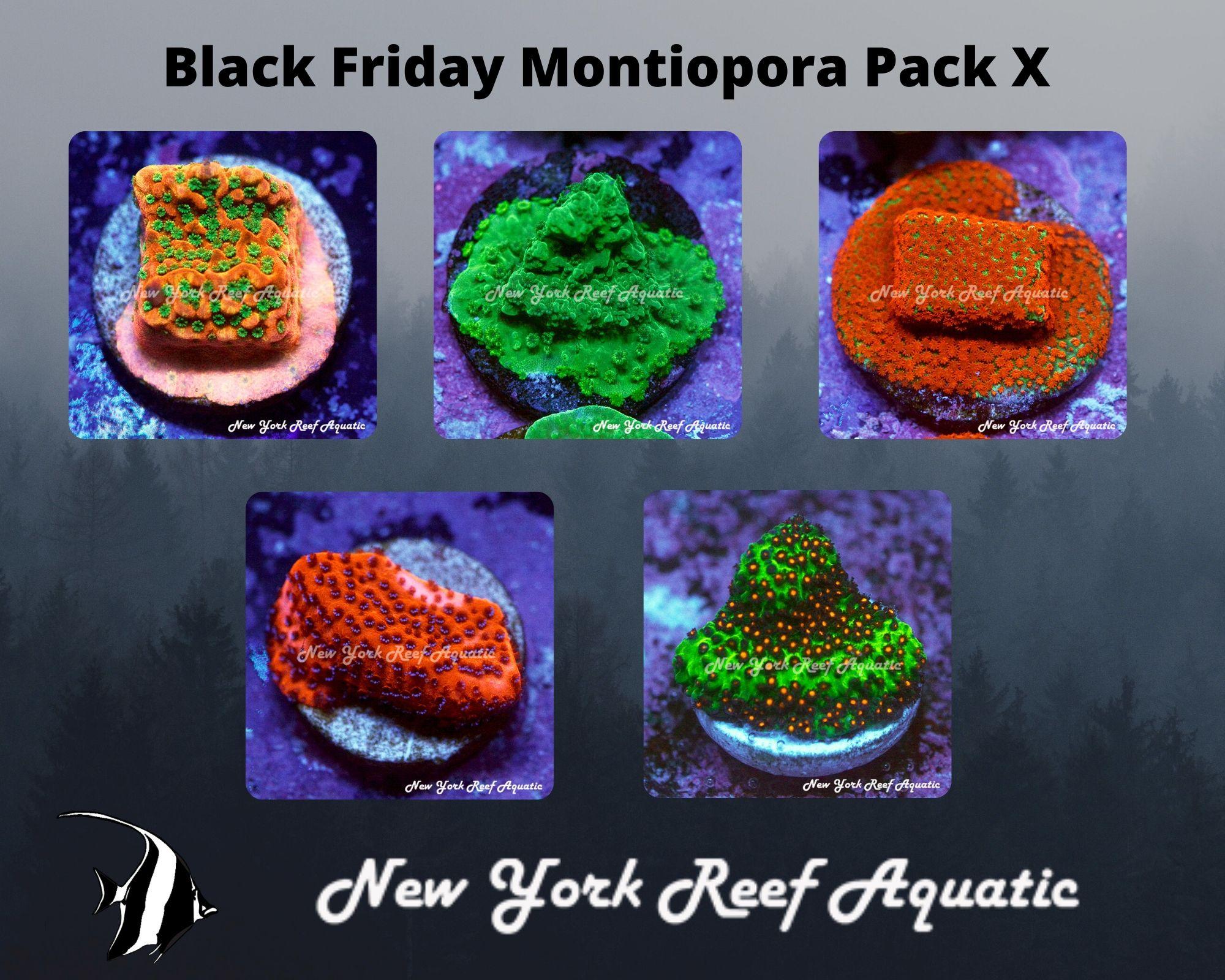 Montiopora Pack X.jpg