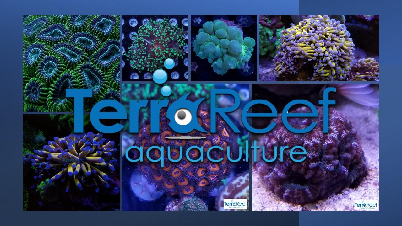2021 TerraReef Ad Aquacultured Corals For Sale Online.jpg