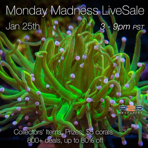 R2R-JAN25-LS-Mondaymadness-square-banner.jpeg